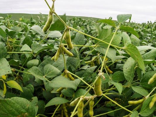 Crops Giant Harvest_Atki.jpg