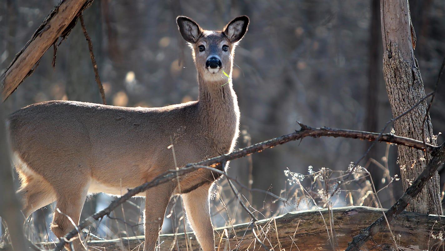 officials consider deer hunting in eagle creek park