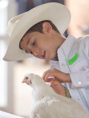 Toni Stanley preens his market chicken in the Junior