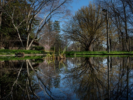 Trees are reflected in a pond at the W. J. Beal Botanical