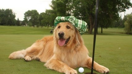 Saturday, Oct. 21, the Humane Society of St. Lucie will host the 3rd Annual Putt for Paws Golf Classic at St. Lucie Trail Golf Club to help the more than 5,000 homeless pets we care for each year.