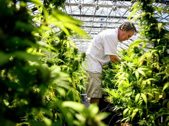 Medical Marijuana (2)
