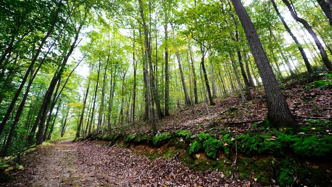 A somewhat steep trail takes hikers from the Turkey Hill Trail into the Chestnut Grove Natural Area in Manor Township, Lancaster County..