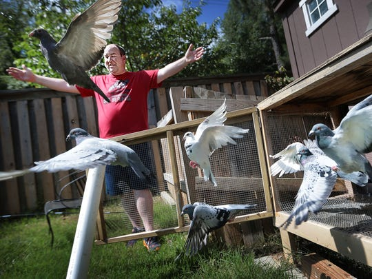 Stan Elkins releases his pigeons for a turn around his Bartlett neighborhood Tuesday morning. Elkins is a pigeon racer, and after three years in the sport hopes to start a pigeon racing club in the Memphis area.