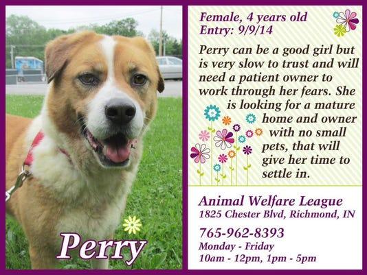 635993492670438239-pet-of-the-week----perry.jpg