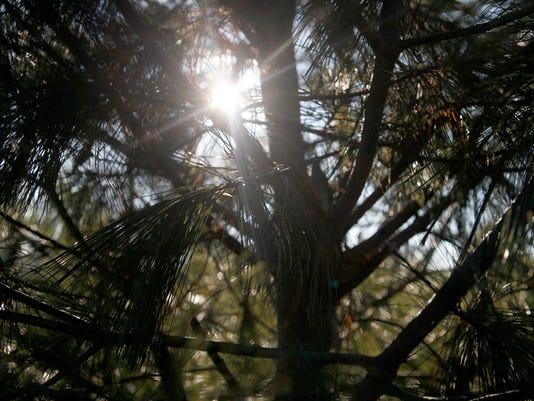 -MNI 1130 trees 39.jpg_20131205.jpg