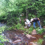 Volunteers needed for Paris Mountain trail workday Thursday