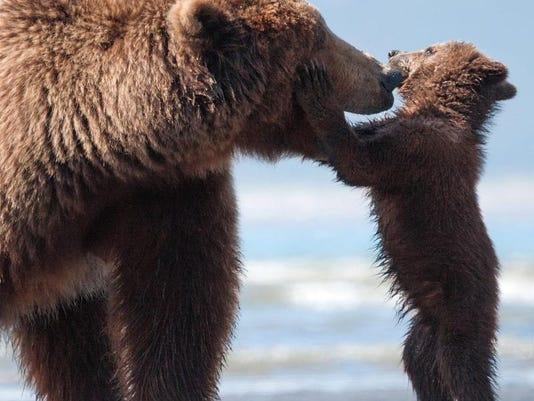 Film Review Bears