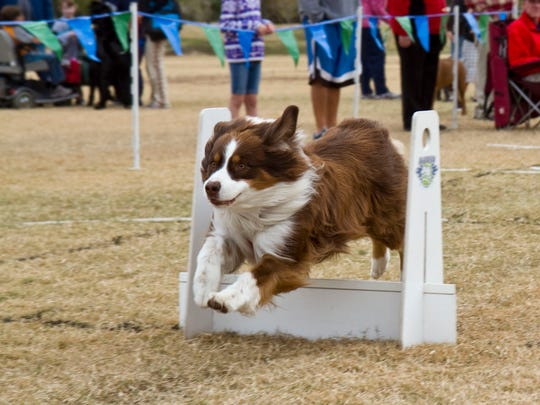 Woofstock is for the entire family, including members who are of the canine variety.