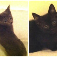 SEPT. 19 – Shimmy and Shake are available for adoption through Stray Rescue of St. Louis.