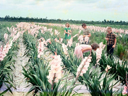 Fort Myers was once the gladiolus capital of the world