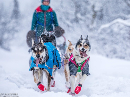 Paxson and Mocha charge down the trail, pulling Shaynee Traska's sled in the 2018 Two Rivers 200. In the 200-mile-long event, Traska and her team took fifth place and nabbed the Vet's Choice and Sportsmanship Awards.