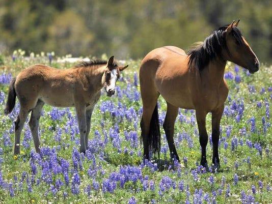 1 Horse Sanctuary