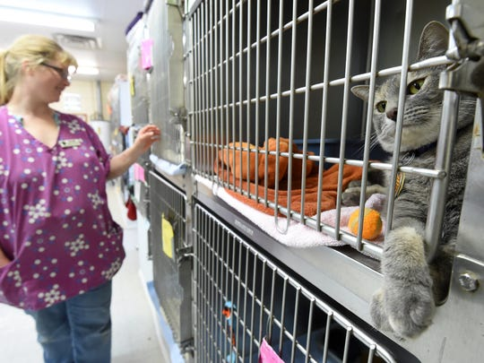 Danielle Reynolds, shelter attendant at the Humane Society of North Central Arkansas, checks on cats Wednesday at the shelter. The entire board for the Humane Society of North Central Arkansas resigned during a meeting on Tuesday.
