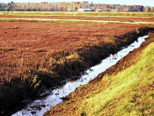 Cranberry bogs are long-term investments for growers.