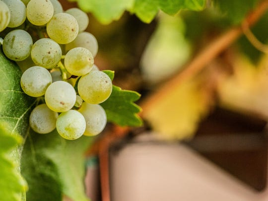 Grapes for Romabuer's new sauvignon blanc, the 2015 vintage, were hand-sorted in the vineyard and fermented in a combination of 90 percent stainless steel and 10 percent neutral French oak.