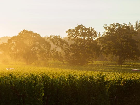 Sunrise comes to one of the four vineyards from which Rombauer Vineyards sources fruit for its new sauvignon blanc. The vineyards are in the Napa Valley and Pope Valley.