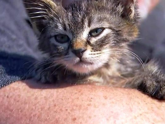 Kitten Glued to Road