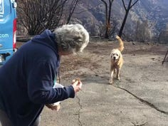 Dog that survived Calif. wildfire guarded home for weeks