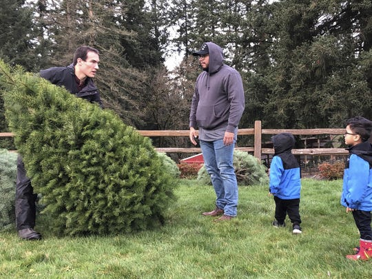 For holiday decorations, the Environmental Protection Agency recommends opting for a living tree that can be planted outdoors or eventually mulched.