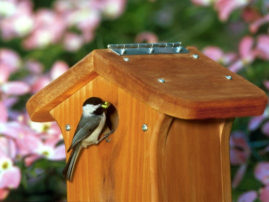 635791417737968536-chickadee-on-nestbox