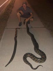 Kevin Dinger with the two pythons captured near the Lely neighborhood in East Naples on Tuesday, Dec. 5, 2017. Dinger saw a python while driving on Collier Boulevard and called law enforcement officers, who captured the two snakes.