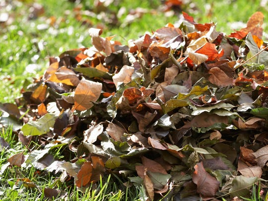 Reader wonders if the leaves should be left where they