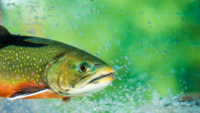 New fishing regulations to take effect in April.