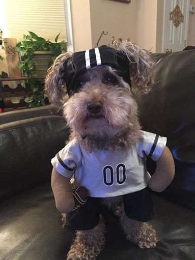 A furry football player