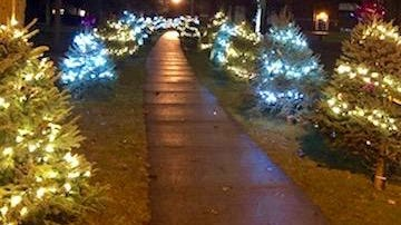 """The walkway at Carl Fast Park in Jonesville lights up during the inaugural """"Lights of Love"""" tree dedication in 2019. This year, 25 live potted trees have been added to the display."""