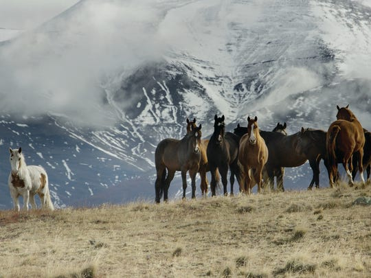 Estancia Nibepo Aike-Patagonia, Argentina