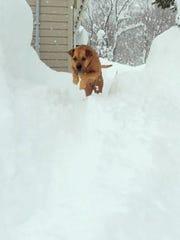 Carol Yerdon's dog, Rose, romping in February 2017