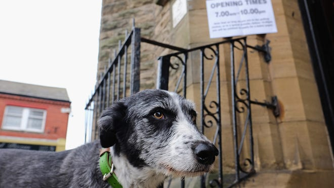 A dog is tied to railings outside a polling station waiting for its owner to cast their vote on the EU Referendum on Thursday, June 23, 2016, in Saltburn-by-the-Sea, United Kingdom. The United Kingdom has gone to the polls to decide whether or not the country wishes to remain within the European Union. The #dogsatpollingstations is trending on Twitter as users take their dogs to polling stations.