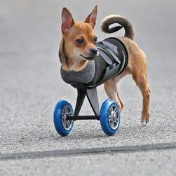 TurboRoo gets mobile
