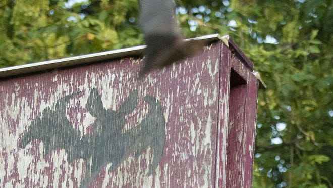 A bat flies out of a box shortly before sunset.