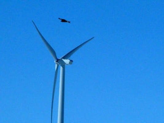 Wind-Energy-Eagle-Dea-Rash.jpg
