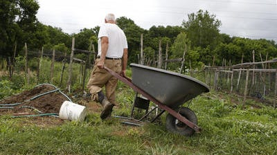 """Ed Tuttle works in his garden in Mariemont's South 80 acres last year. The village park includes trails, farmland and community gardens abutting the woods and Little Miami River. The Eastern Corridor project is slated to intersect this area. Tuttle said of the project, """"That would really hurt me, I have about an acre planted here."""""""