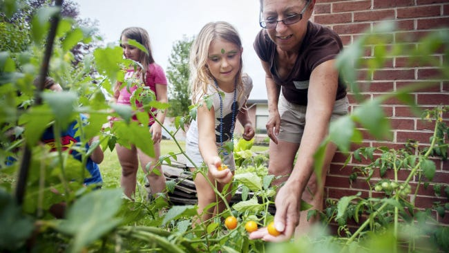 Temple Beth Israel volunteer Nada Seidon helps first grader Savannah Heney pick cherry tomatoes with seventh grader Amie Quig, left, and fourth grader Tehya Heney, center, from the courtyard garden at Goode Elementary School during Back to School Night. The previously overgrown garden has been manicured and producing veggies this summer.