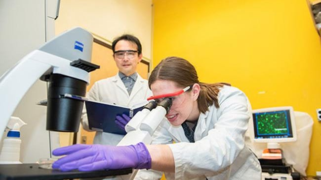 Recent Kansas State University graduate Mackenzie Thornton, a former recipient of a Cancer Research Award from the Johnson Cancer Research Center, works with her faculty mentor, Katsura Asano, professor of biology.