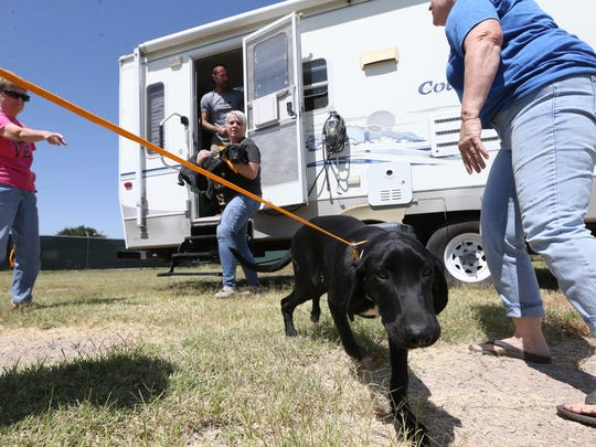 Dogs are taken out of a trailer after their arrival