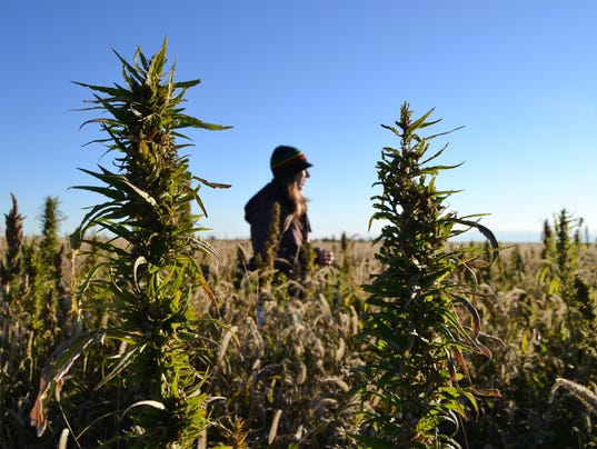 AP Food And Farm Industrial Hemp