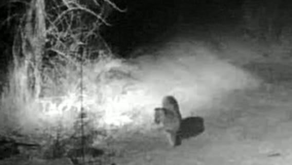 A mountain lion approaches a house in a video clip taken in January north of Aztec.