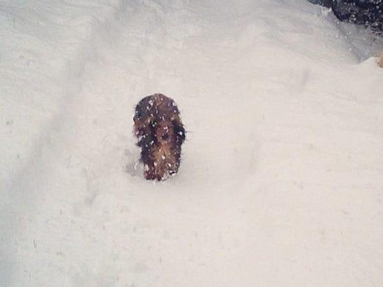 Whinnie runs through the snow Sunday.