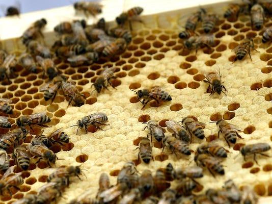 Urban Beekeeping_Syed