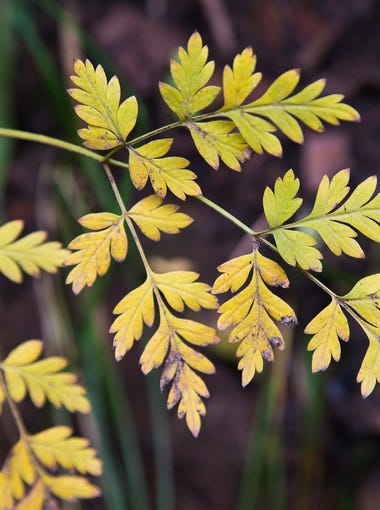 Leaves begin to change colors as fall takes over Oak Creek Canyon, Ariz. October 7, 2014.