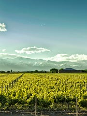 Vineyard at foot of the Andes in Argentina.