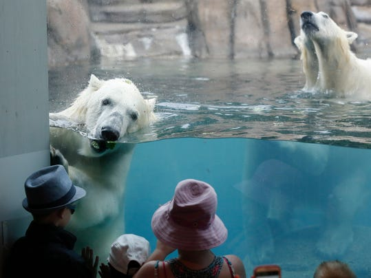 Polar Bears Leaving_Schw.jpg