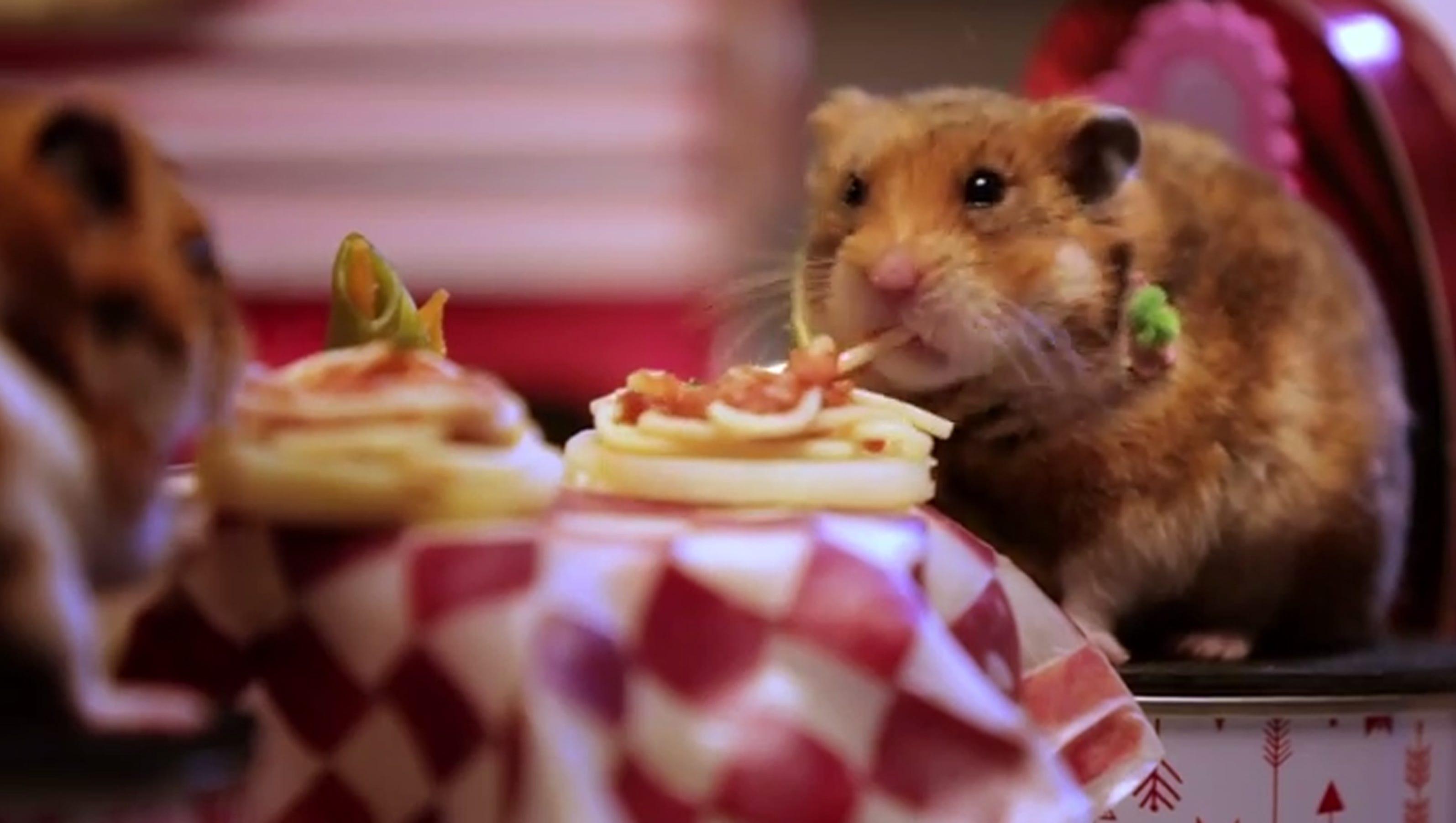 dating hamster free