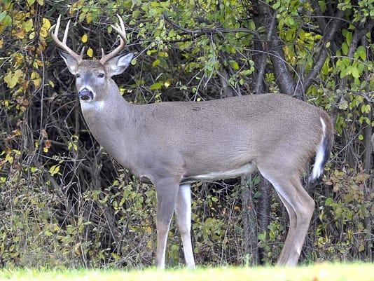 636575028824758321-deer.jpg
