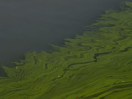 In this Sept. 15, 2017, file photo, algae floats on the surface of Lake Erie's Maumee Bay in Oregon, Ohio. Ohio for the first time is declaring western Lake Erie impaired by the toxic algae that has fouled drinking water and closed beaches in recent years. The Ohio Environmental Protection Agency's announcement Thursday, March 22, 2018, comes amid a federal lawsuit over whether part of the shallowest of the Great Lakes should be declared impaired.